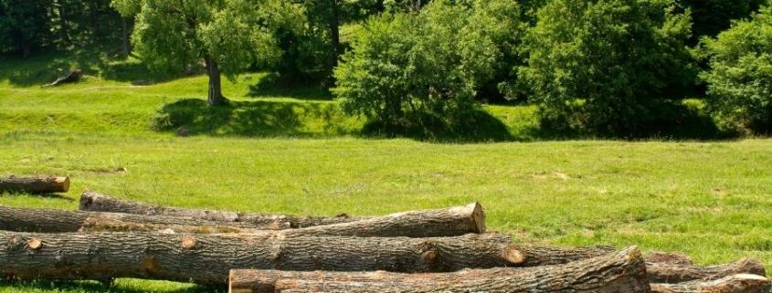 Gestión forestal