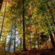 cuidemos los bosques