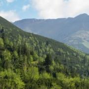 europa ha aumentado su masa forestal